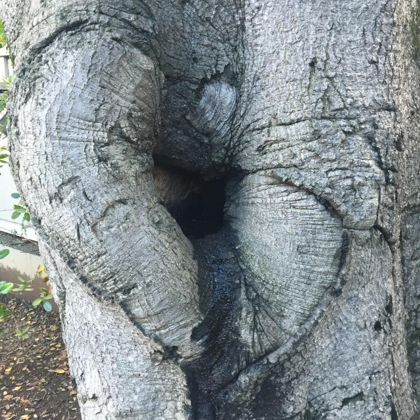 Allowing Nature To Impress Its Gargantuan Self Upon My TinyMind